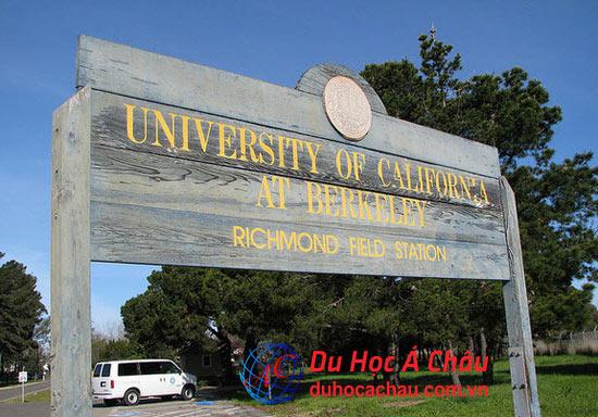 công nghệ thông tin đại học California Berkeley