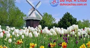 đi du học Hà Lan, điều kiện du học hà lan