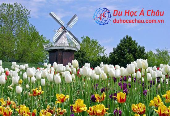 Yêu cầu điều kiện đi du học Hà Lan có khó hay không?